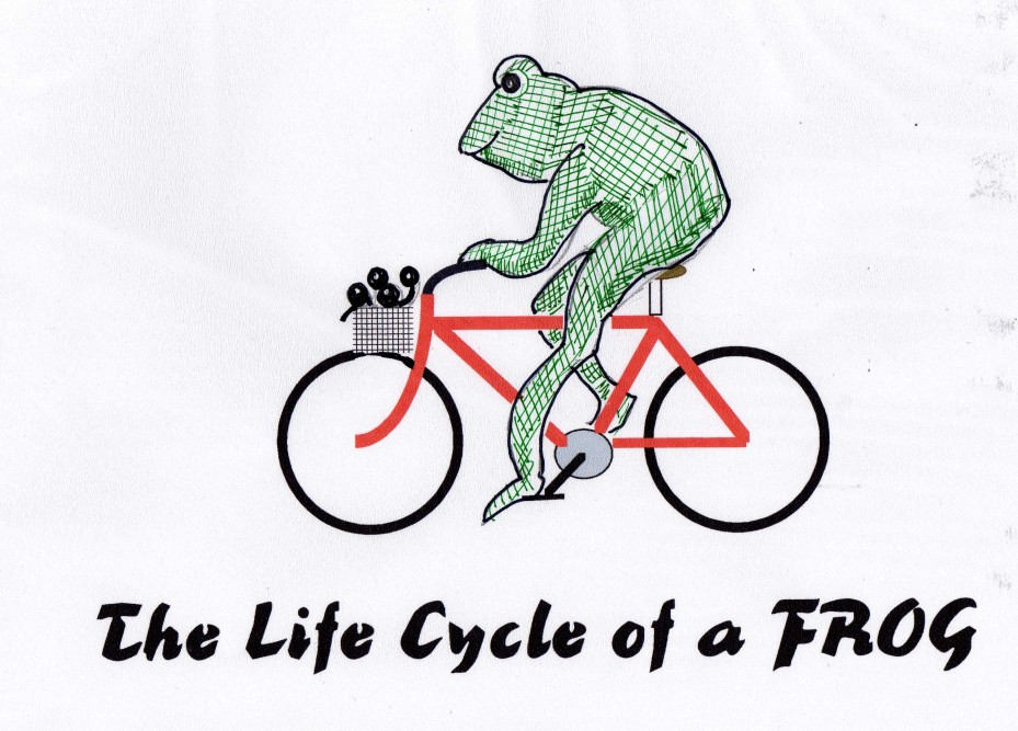 cycling frog046
