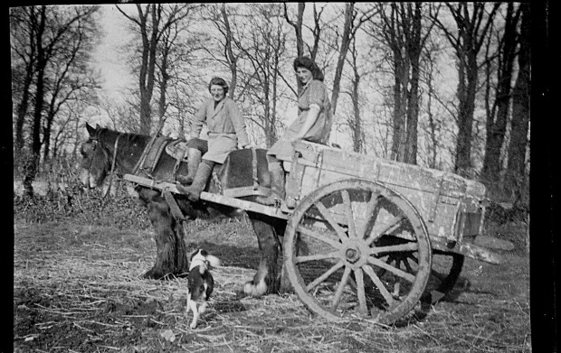 MY MOTHER IN LAW IN WARTIME WITH A HORSE AND CART