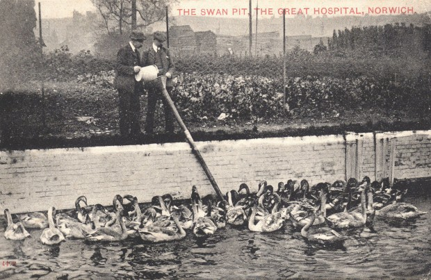 SWAN PIT, GREAT HOSPITAL, NORWICH