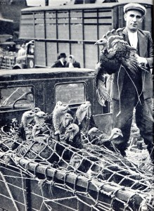Annual Turkey sale at Attleborough, 1950.