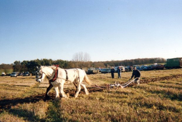 Ploughing by horse team at Attlebridge.