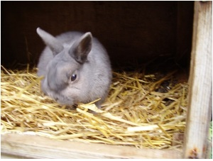 BENJIE was the rabbit we bought from Pet Farm in Attlebridge just before it closed
