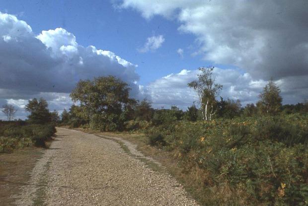 A Norfolk heath