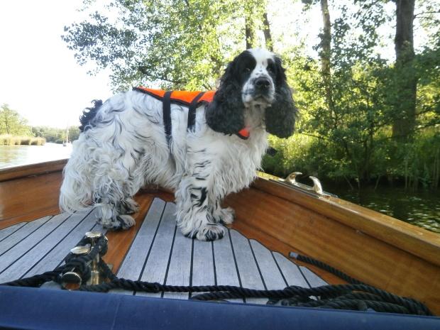 Charlie on a Dutch canal